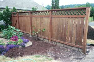 Preparing fence for move 20 feet forward; grapevine must go.