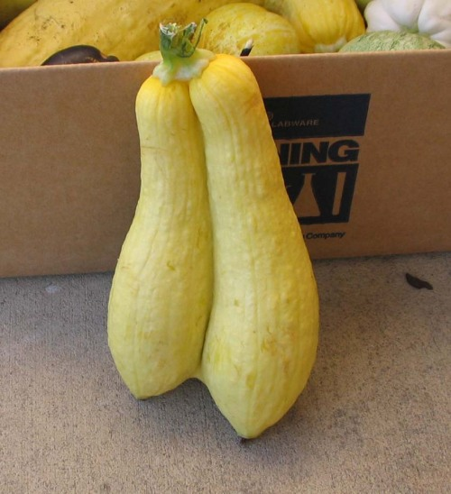 Double-takes on yellow straightneck squash