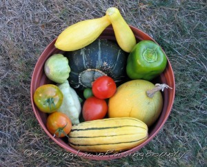 "Final samplings of squash, tomatoes, and peppers.  Clockwise from yellow summer squash resting on top of darker buttercup squash: ""yellow"" pepper, spaghetti squash, delicata squash, patty-pan squash, with ripening tomatoes nestled among squash."