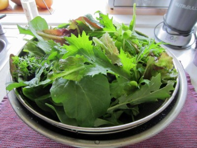 Magical mesclun mix!