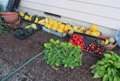 The typical way we keep the squash, melon, and tomato harvest aired and dry during the mild, not-too-rainy days of fall....stored under my eaves.